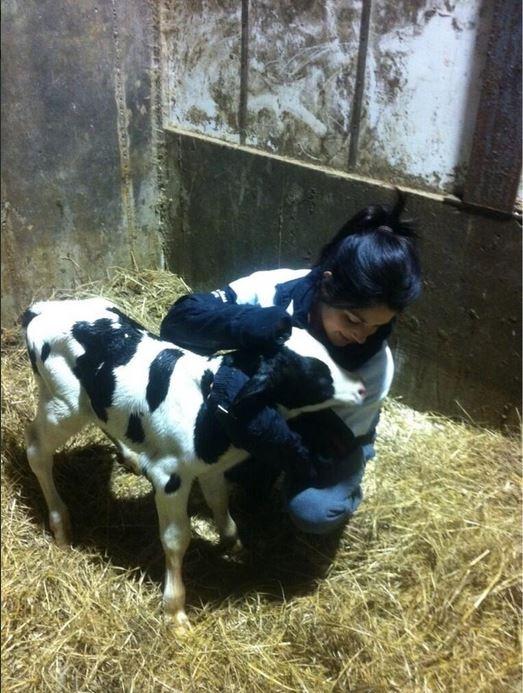 Jillian with a baby calf