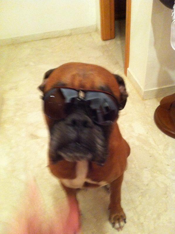 Benny mit Sonnenbrille