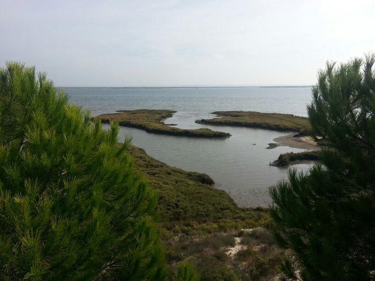 Estuário do rio Sado