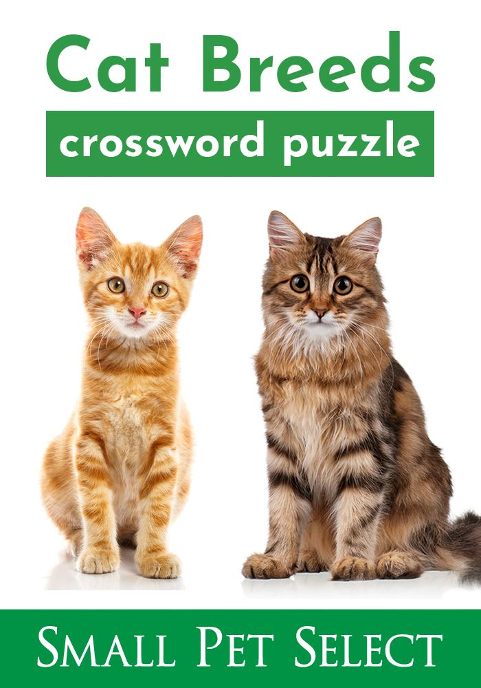 Cat Breed Puzzle Cat Breeds Cats Small Pets