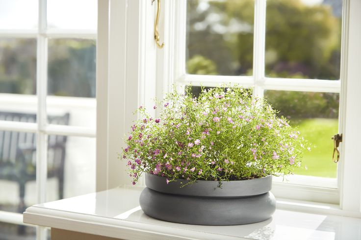 Beautiful flowerpots • Hinken pots • Designed by Silje Nesdal & Ann Kristin Einarsen #flowerpots #flowers #pots #spring #accessories #ceramic #norwegian #design #WOUDdesign