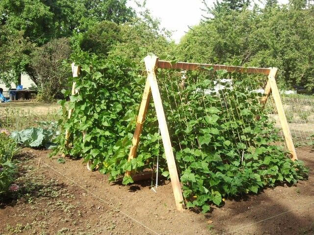 green bean trellis ideas