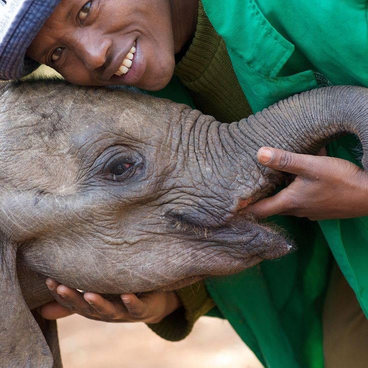 Adopt an Elephant Orphan or Rhino Orphan with the David Sheldrick Wildlife Trust through our online fostering program.