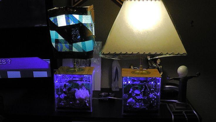 Come Creare Un Abat Jour Particolare Lampada Basile Aquarium Lamp Comple...