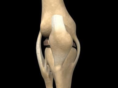 A Ligament is a Structure that Connects Two Bones