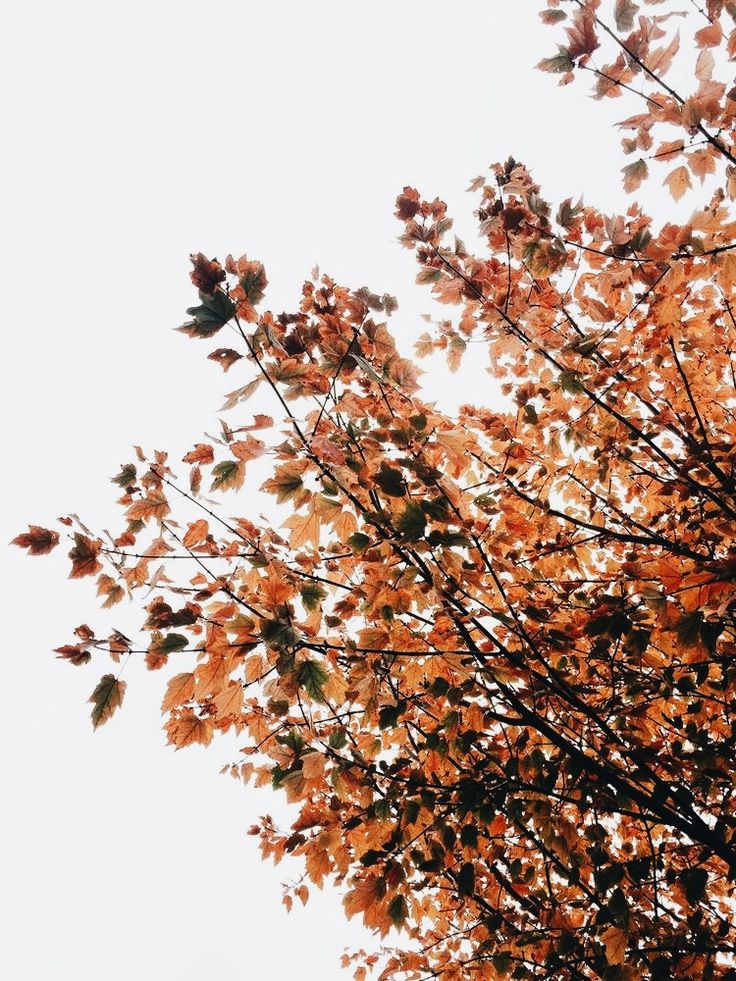 Pinterest Chandlerjocleve Instagram Chandlercleveland: Best 25+ Hello Autumn Ideas On Pinterest
