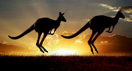 Kangaroo's Odd Facts - Karumba Point Sunset Caravan Park - Queensland, Australia