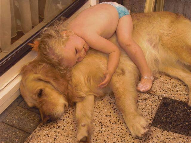 Il+mio+cane+non+è+mio+figlio.