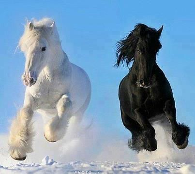 pictures of clydesdale horses | Bla