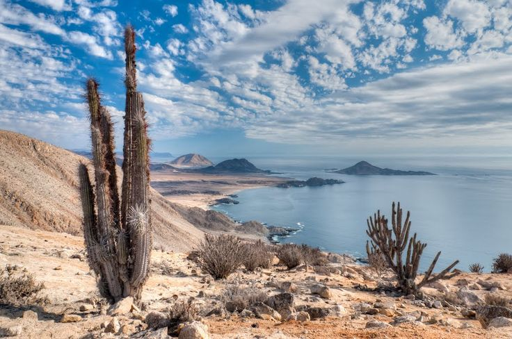 Pan de Azúcar National Park, Chile