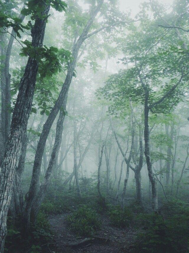 안개낀 숲, 직찍