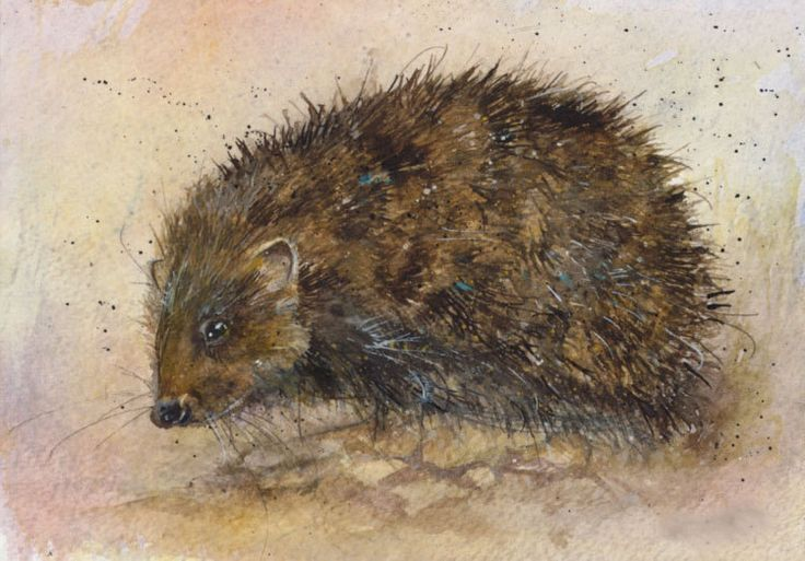 Kate Wyatt Artist|Buy Art Online|Animal Print|Hedgehog - Candle and Blue