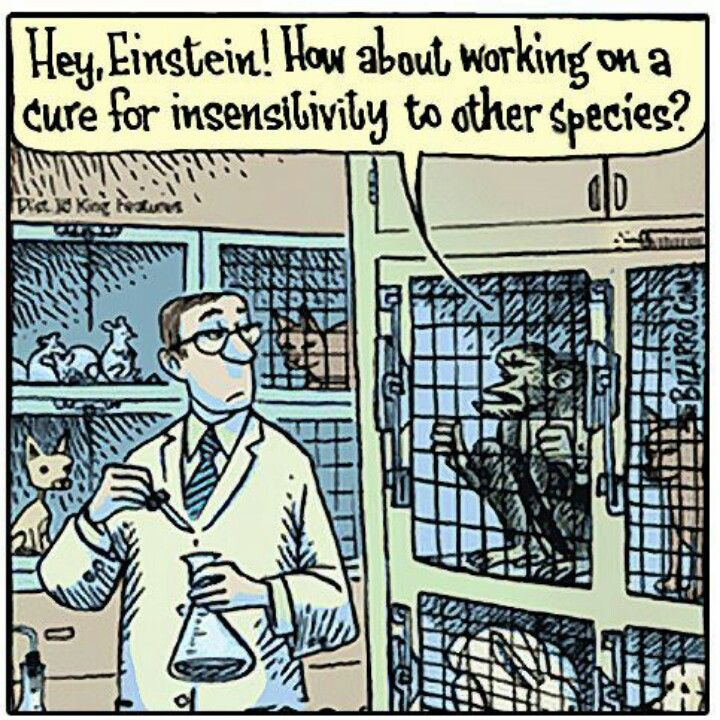 Horrific fact of the day: 95% of animals used in experiments are not protected by the federal Animal Welfare Act (AWA), which excludes birds, rats and mice bred for research, and cold-blooded animals such as reptiles and most fish. What I get out of this sickening statistic: Criminals get charged for murdering other human beings, yet lab chemists get away with torturing and killing helpless animals. Question is - What makes our lives more valuable than theirs? Answer -Nothing.