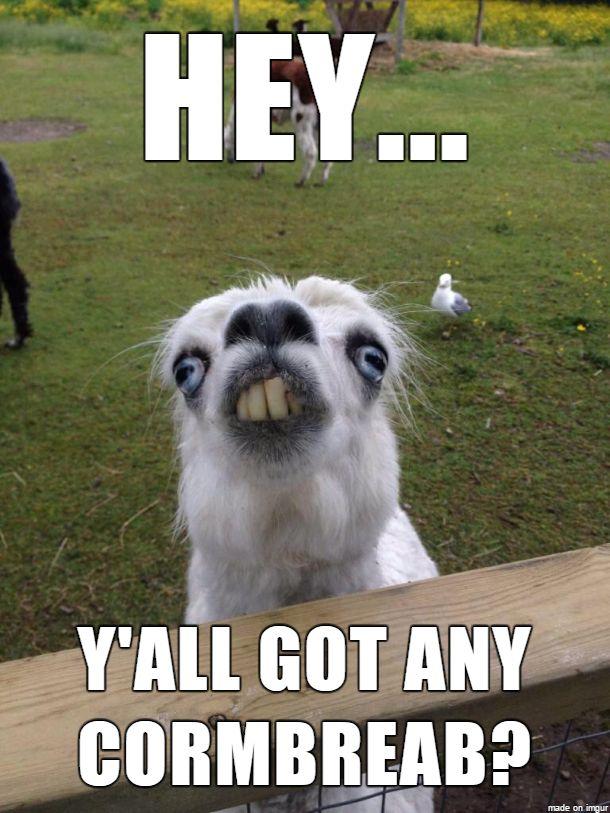 Cornbread Llama... BWAHAHAHAHA!!!