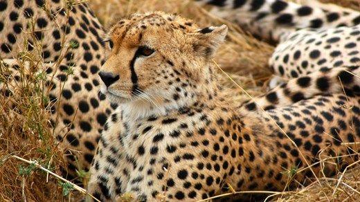 Frivillig arbeid med dyr i Sør-Afrika: 5 prosjekter i ett