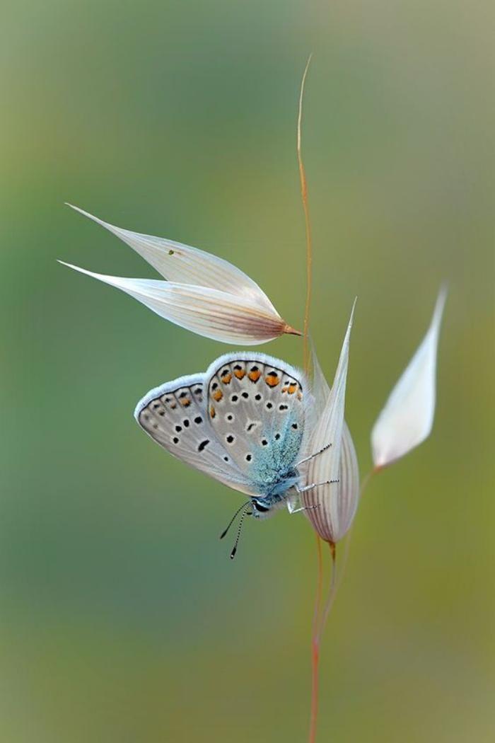 photos de papillons, créatures sophistiquées