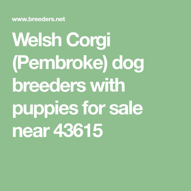 Welsh Corgi (Pembroke) dog breeders with puppies for sale near 43615