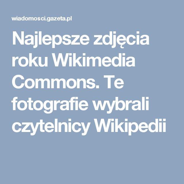 Najlepsze zdjęcia roku Wikimedia Commons. Te fotografie wybrali czytelnicy Wikipedii
