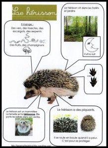 fiches d'identité animaux