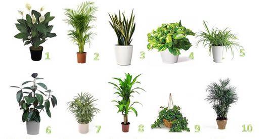 piante purificano aria
