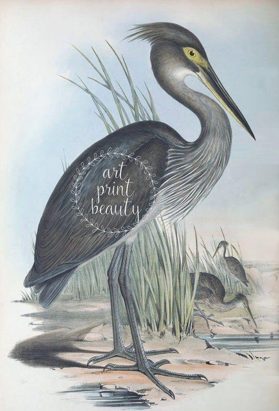 Crane And Heron Birds Print Set Of 2 Large Wall Art Decor Etsy Heron Art Bird Prints Bird Wall Art