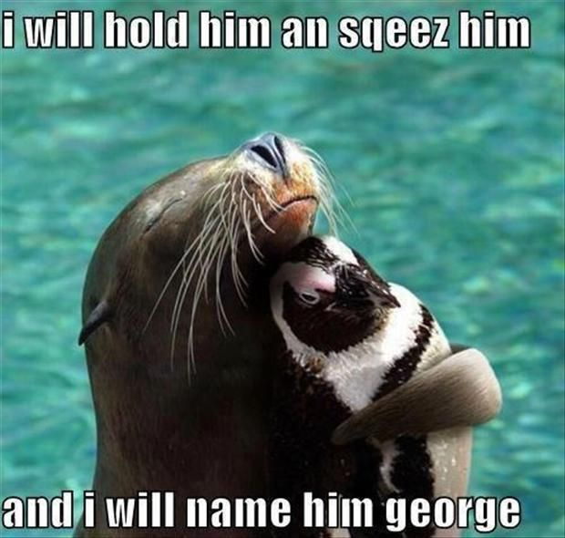 Funny Animal Pictures – 60 Pics. Amber you need to scroll through these, you'll see why. Alex, originally pinned it for you.