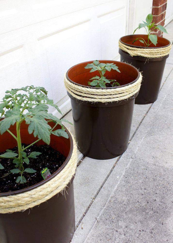 Transform a 5 Gallon Bucket Into a Tomato Planter
