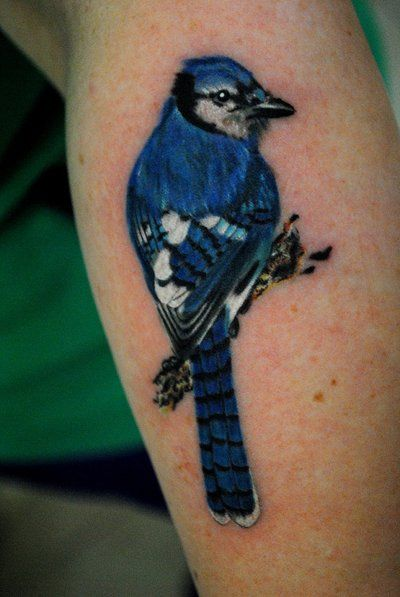 Bluejay by truth-is-absolution on DeviantArt