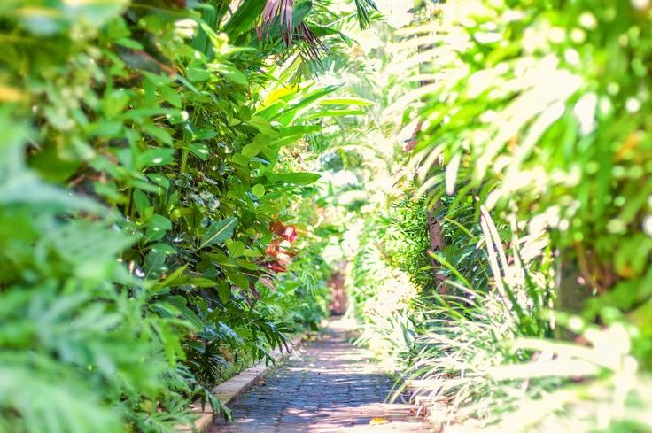 Tropical lust garden in Villa Atap Putih - by soobalivillas in Seminyak
