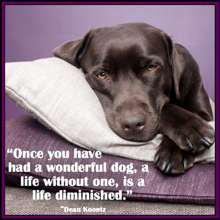 Dog quote via www.Facebook.com/PositivityToolbox