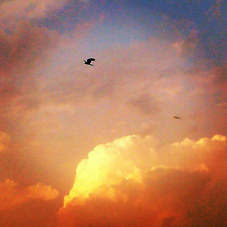 As free as bird!