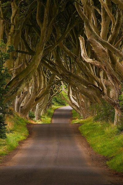 Não importa o final da jornada, mas sim o caminho. E que caminho! County Antrim, Irlanda.