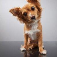 #dogalize Otiti da corpo estraneo nei cani: i sintomi e la terapia #dogs #cats #pets