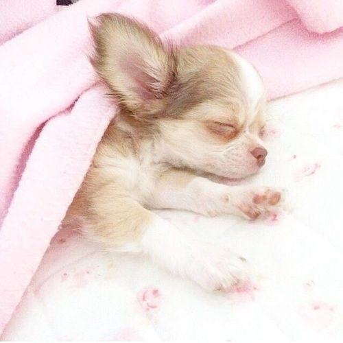 Imagem de dog, cute, and pink