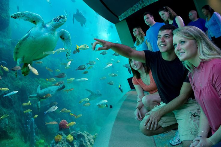 Marvel at a turtles-eye-view of the ocean on TurtleTrek, the world's only 3D-360 experience.