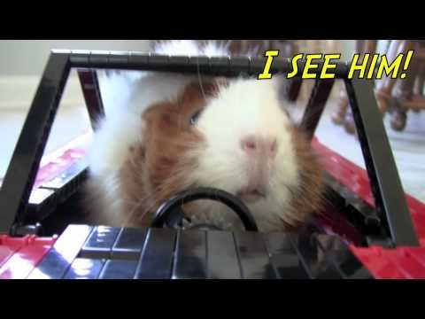 "Cute guinea pigs drive their own spy car and save the world, or at least their lettuce! (Also see sequel: ""To the Guineacycle!"")"