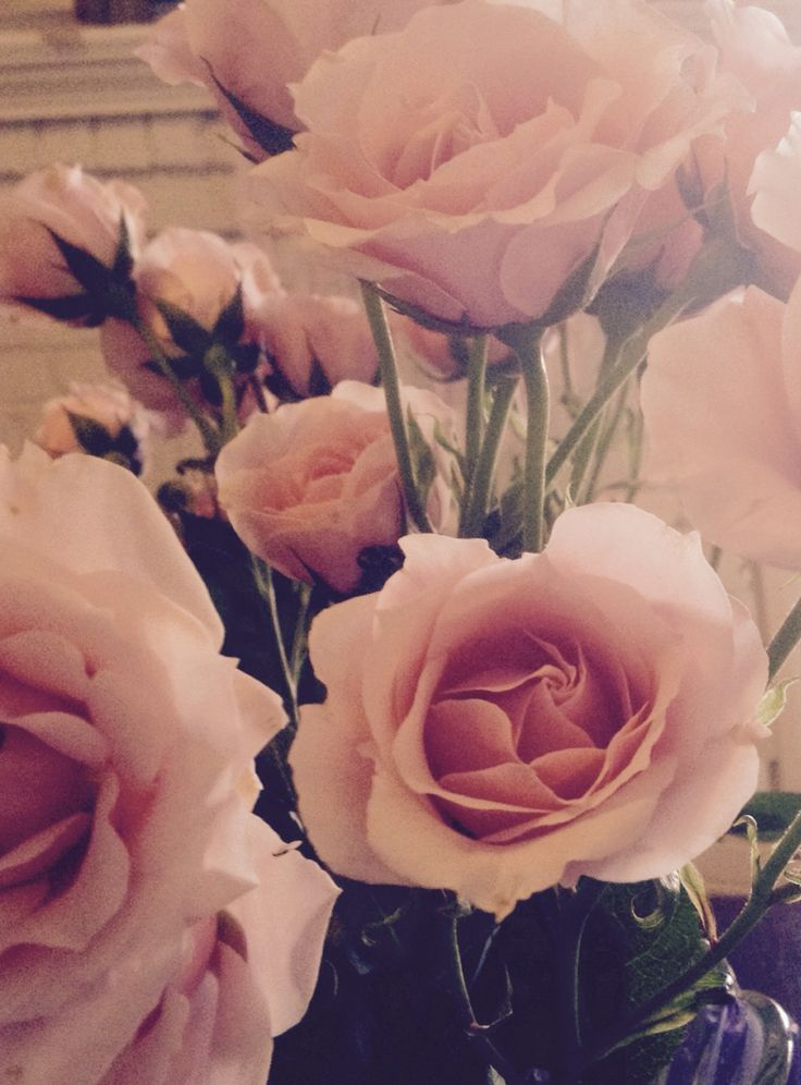 My photo of pink roses taken at home November 2014