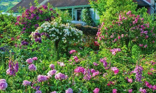 Новые сорта роз — эффектные и неприхотливые