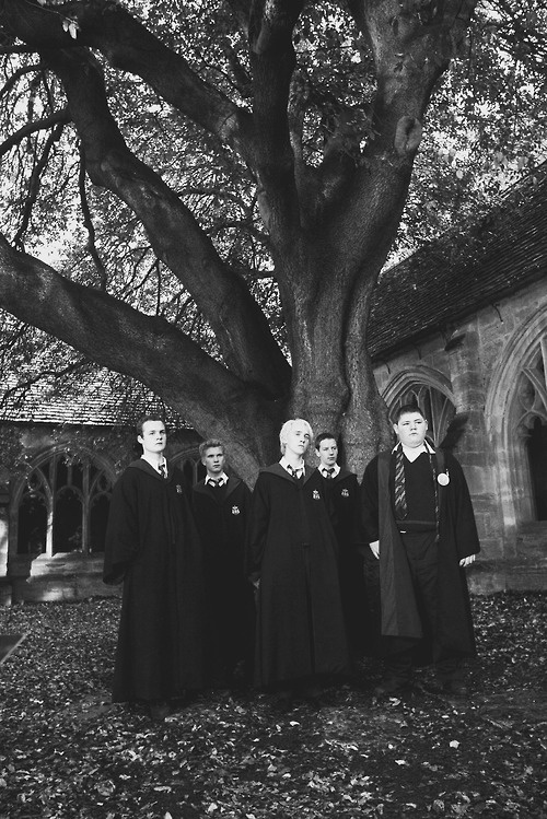 Goblet of Fire - actually stood under that tree this year...