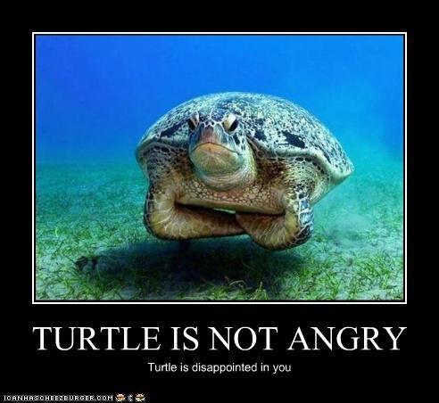 Sorry turtle!