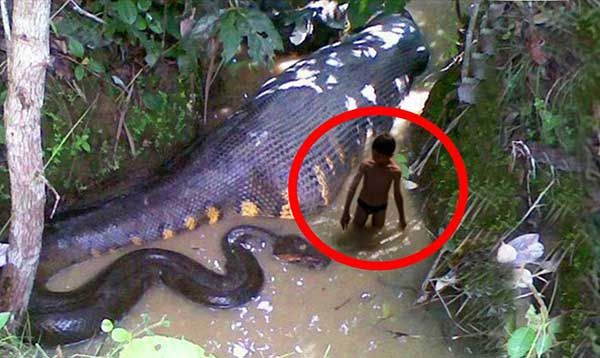 Top 10 most dangerous animals in asia 2015 weird news for Dangerous fish in the amazon