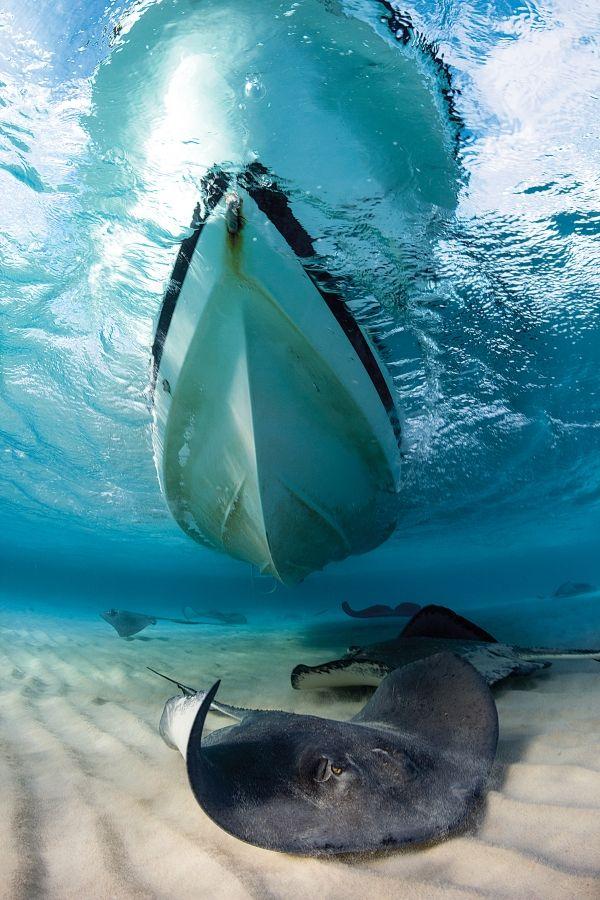 10 Besten Freediving Quotes Bilder Auf Pinterest
