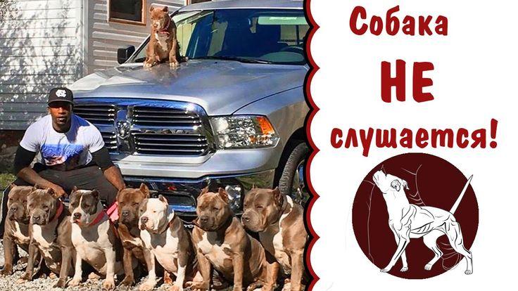 Причины непослушания собаки | Вожак стаи или лидер | дрессировка собак