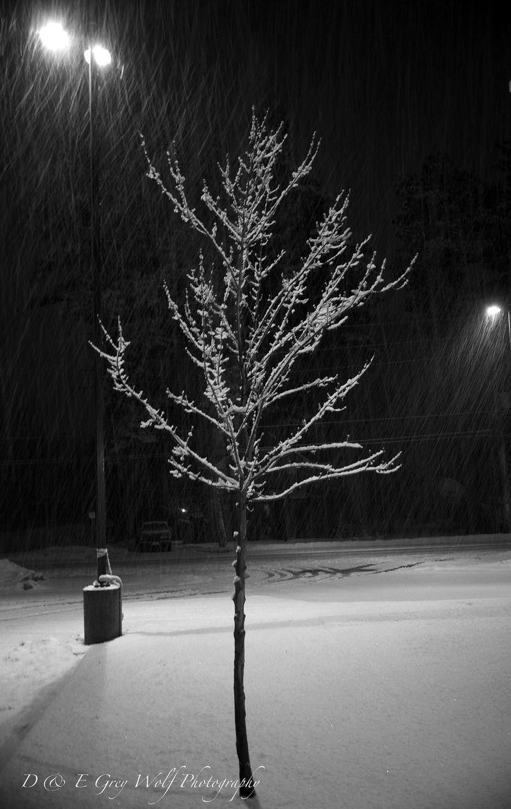 https://flic.kr/p/Rq5rVA | Snowy Morning