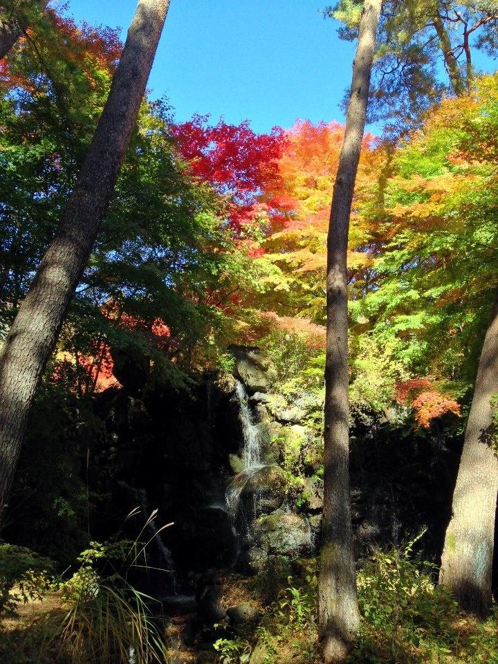 Koyo 2012 cascade et rables couleurs d 39 automne dans le - Le jardin d erables ...