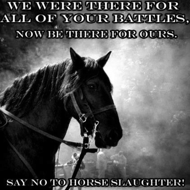horses don t deserve slaughter 20 abandoned horses will be sent to slaughter 2 i can help these horses we can help these horses they don't have they're good horses they didn't deserve.