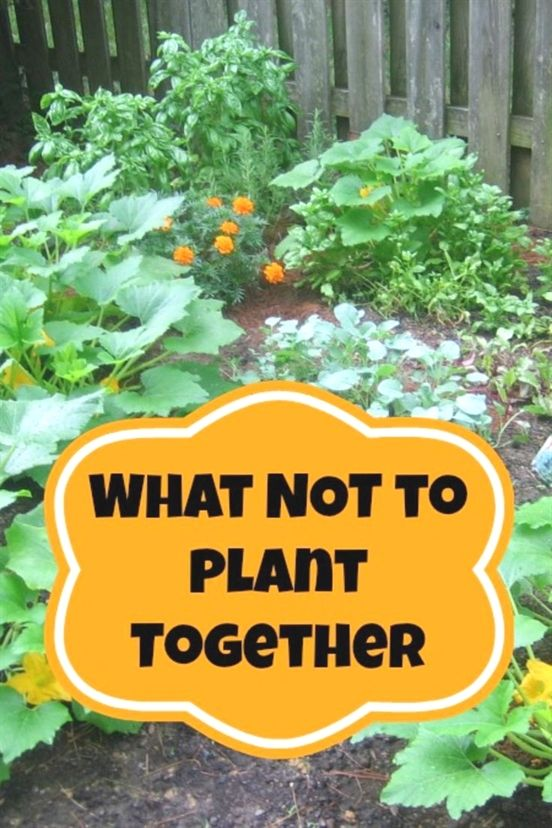 Make Your Garden Special Plants Veggie Garden Survival Gardening