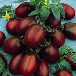 Black Plum heirloom tomato
