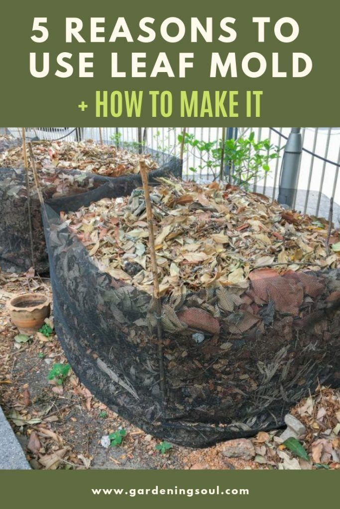 5 Reasons To Use Leaf Mold How To Make It With Images Leaf Compost Leaf Mulch Vegetable Garden Tips
