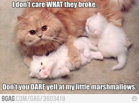 Motherly love!Animal Pictures, Mothers, Funny Pictures, Funny Cat, Kittens, Funny Animal, Marshmallows, Persian Cat, I Don'T Care